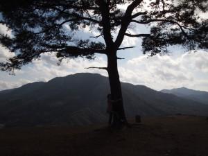 竹田城の木